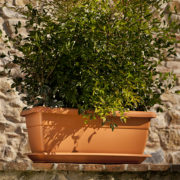 ducale-with-saucer-terracotta-color