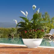 Ciotola Bowl White